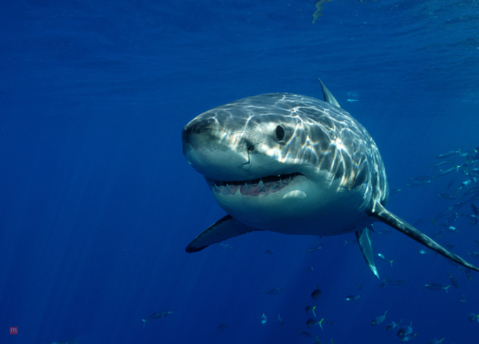 Don't Forget The Sharks When You Go Home