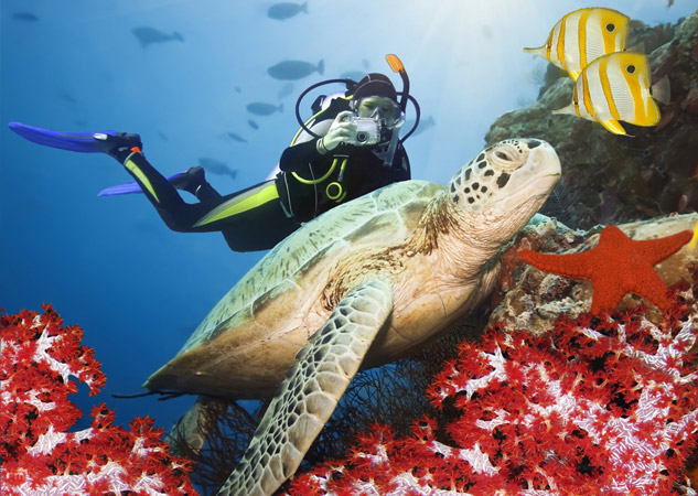 adventurous destinations  scuba diving